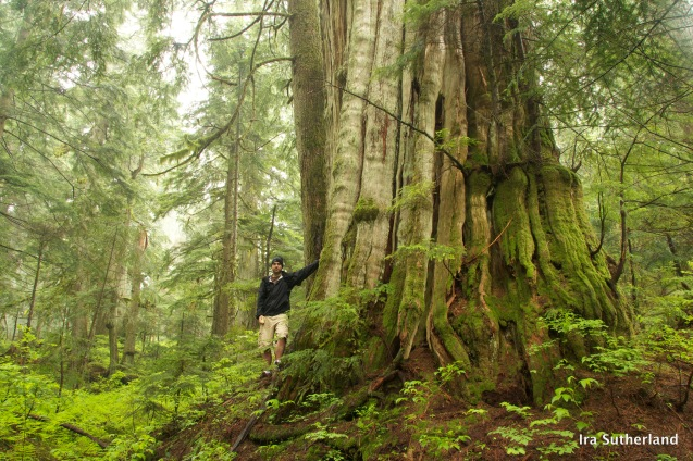 Ira's most visited page: Vancouver big tree hiking guide