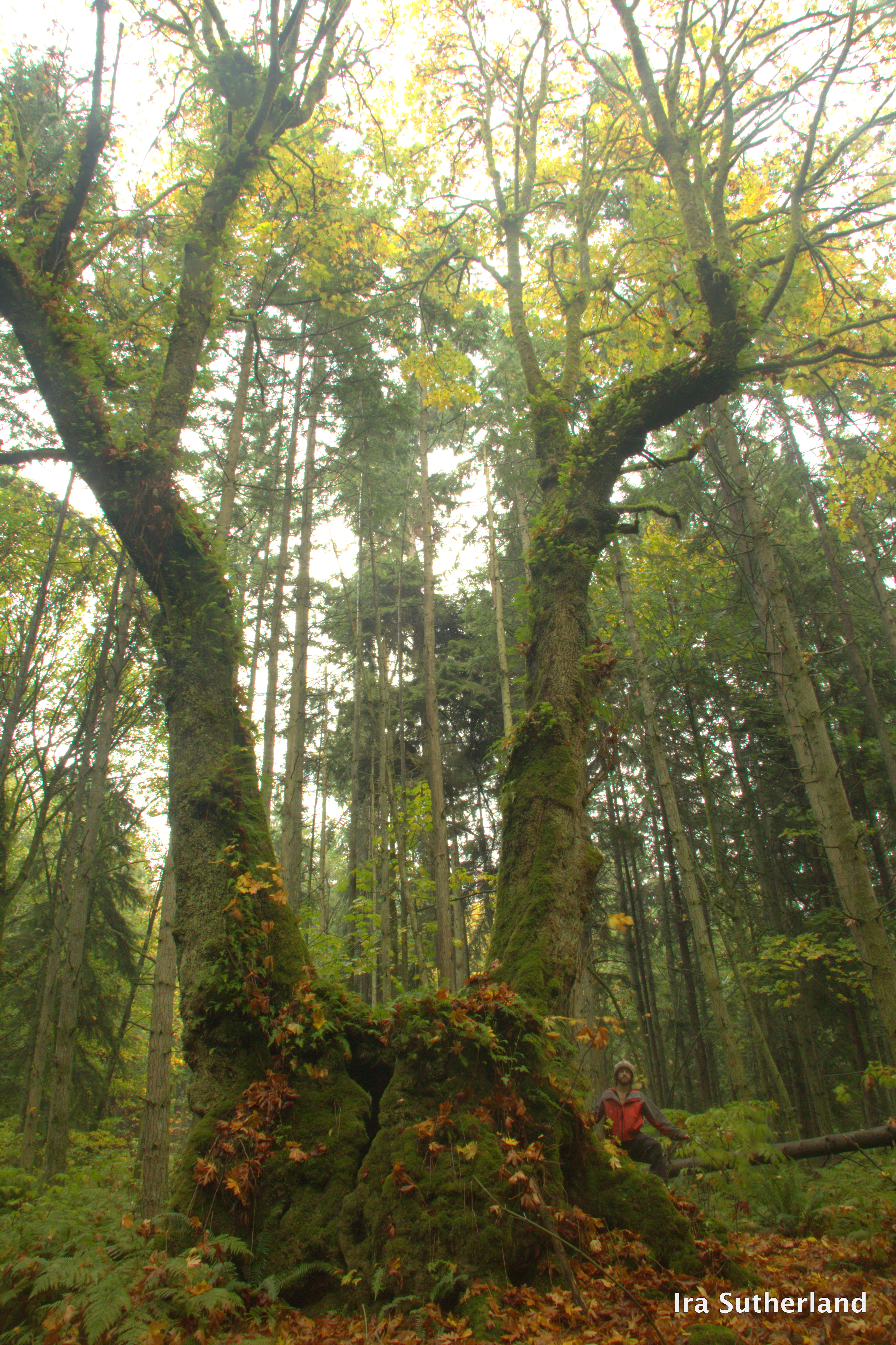 Vancouver Big Tree Hiking Guide | Your ecological ...
