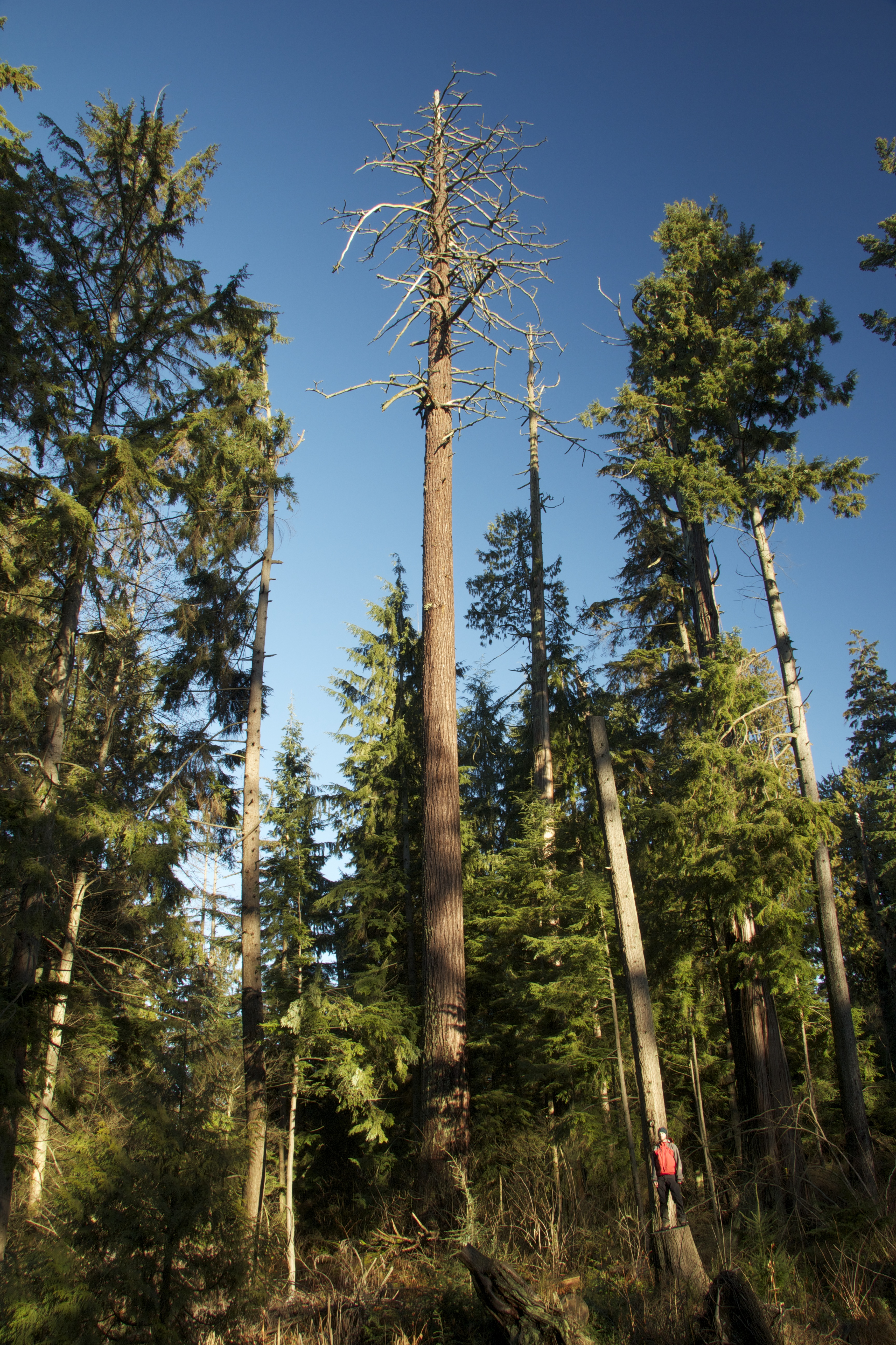 The Stanley Park Forest Vancouver Big Tree Hiking Guide