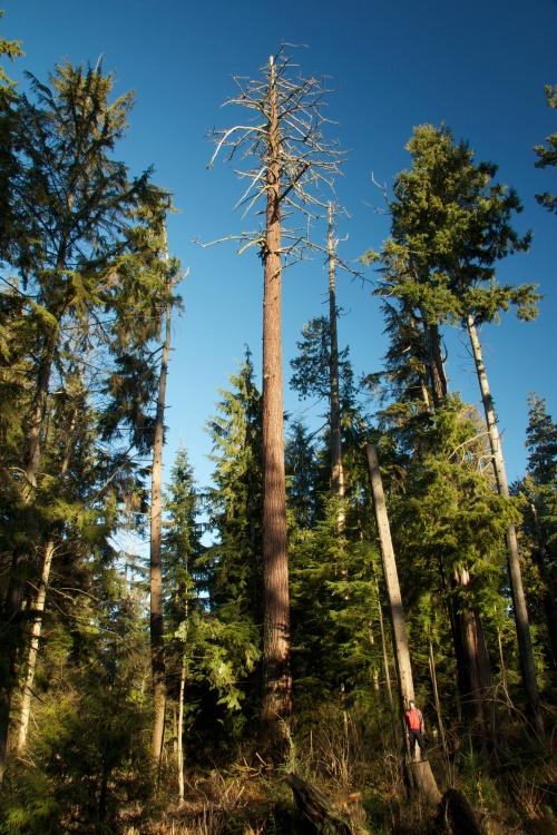 The Eagle Tree 2010-2011.jpg