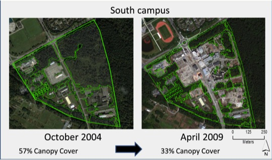 tree canopy loss