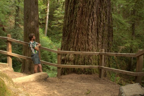 I had to see it for myself: the tallest Douglas-fir in the world is the Doerner fir in Coos County, Oregon