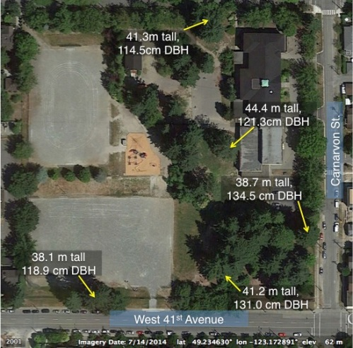 Kerrisdale school tree map